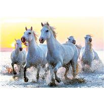 Puzzle 1000 caballos blancos al atardecer