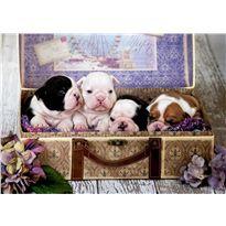 Puzzle 500 cachorros - 04019007
